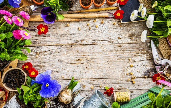 Garden tools, flowers and seeds on a wooden background, frame